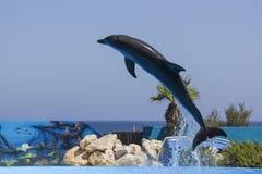 gram delfinów zdjęcia royalty free