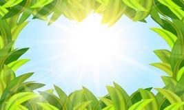 A grama é verde e o sol no céu azul Imagens de Stock Royalty Free