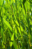 Grama 3 Imagem de Stock