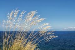Grama alta com vento e mar Foto de Stock Royalty Free