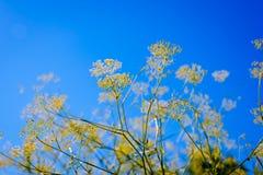 Grama amarela bonita Fotografia de Stock