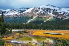 Grama amarela e lagos pequenos Fotos de Stock Royalty Free