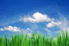 Grama & nuvens Imagens de Stock