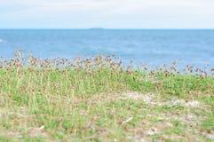 Grama ao lado do mar Fotografia de Stock
