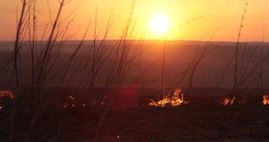 Grama ardente contra o fundo do por do sol vídeos de arquivo
