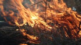 Grama ardente no estepe filme