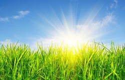 Grama, céu e sol Fotos de Stock Royalty Free