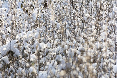 Grama coberta com a neve fotos de stock