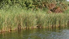 A grama cobre ao longo do banco de rio do rio filme