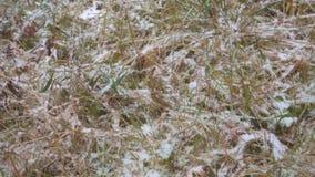 A grama cobriu a primeira neve fresca, voando a câmera video estoque