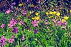 Grama com as flores vermelhas e amarelas Fotos de Stock Royalty Free