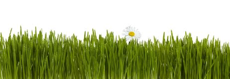 Grama com flor foto de stock
