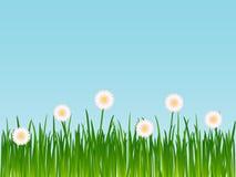 Grama com flores ilustração do vetor