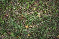 Grama com folhas, vista superior da floresta do outono Espa?o para o texto Fundo imagem de stock royalty free