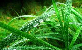A grama com gotas de orvalho fecha-se acima Fotos de Stock Royalty Free