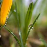 Grama com pingos de chuva Imagens de Stock Royalty Free