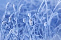 Grama congelada Fotos de Stock