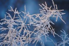 Grama congelada Foto de Stock