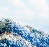Grama congelada Imagens de Stock