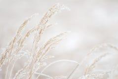 Grama congelada Foto de Stock Royalty Free