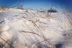 Grama congelada Fotografia de Stock