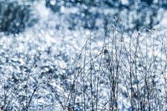 Grama congelada no fundo do refection da iluminação Fotografia de Stock