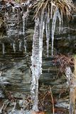 Grama congelada nos sincelos Imagem de Stock Royalty Free