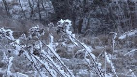 A grama congelada sob a tampa do snov balança no vento frio filme
