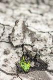 A grama cresce acima no solo seco Fotos de Stock