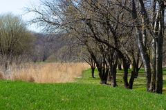 A grama cresce antes da flor das árvores em Midwest América Fotos de Stock Royalty Free