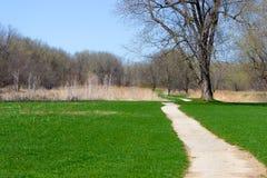A grama cresce antes da flor das árvores em Midwest América de Front Angle Imagem de Stock