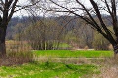 A grama cresce antes da flor das árvores em Midwest América de um ângulo novo Imagem de Stock