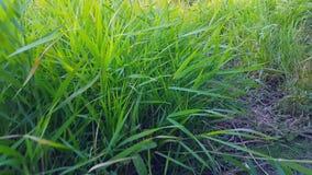A grama cresce ao lado do trajeto filme