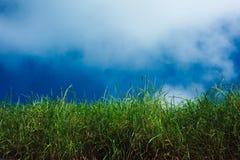 Grama, céu azul e nuvens Fotos de Stock Royalty Free