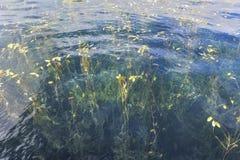 A grama da água do lago do lugu Fotografia de Stock Royalty Free