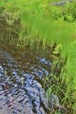 Grama da costa de Leonard Pond situada em Childwold, New York, Estados Unidos foto de stock