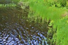Grama da costa de Leonard Pond situada em Childwold, New York, Estados Unidos imagem de stock