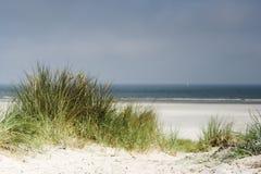 Grama da duna Foto de Stock Royalty Free