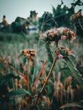 Grama da flor imagens de stock
