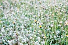 Grama da flor Imagens de Stock Royalty Free