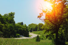 A grama da mola cresce no campo contra o contexto do por do sol Panorama da paisagem da mola Fotografia de Stock