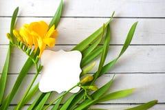 Grama da mola e flores amarelas com os botões com o cartão no fundo de madeira Foto de Stock Royalty Free