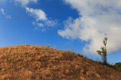 Grama da montanha Foto de Stock