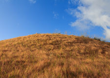 Grama da montanha Fotografia de Stock