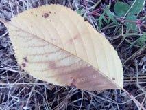 Grama da natureza da queda do outono das folhas do amarelo Imagem de Stock Royalty Free