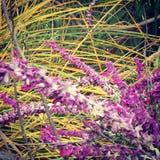 Grama das flores fotos de stock royalty free