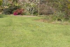 Grama das pragas da erva daninha do gramado Imagem de Stock Royalty Free