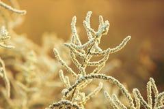 Grama de Autumn Flowering fotografia de stock royalty free