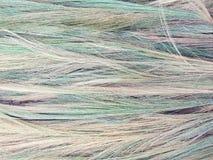 Grama de bambu, grama do tigre, cores diferentes das flores da grama, configuração espalhada para fora para secar Foto de Stock