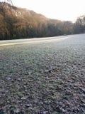A grama de Frost congelada sae do inverno Foto de Stock